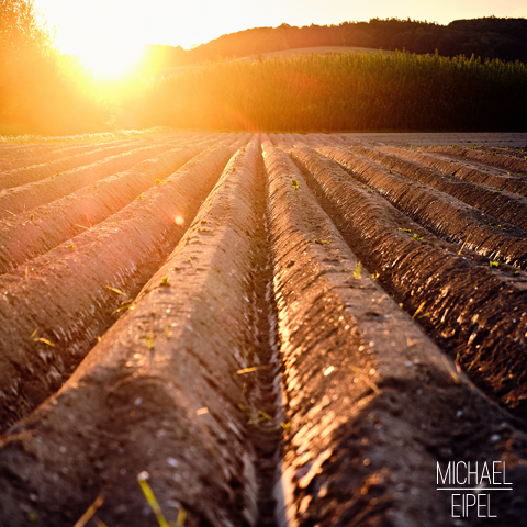 Feld im Sonnenuntergang – Landschaftsfotografie
