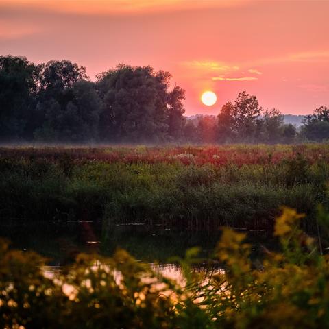 Sonnenuntergang am See mit blühenden Gräsern – Landschaftsfotografie