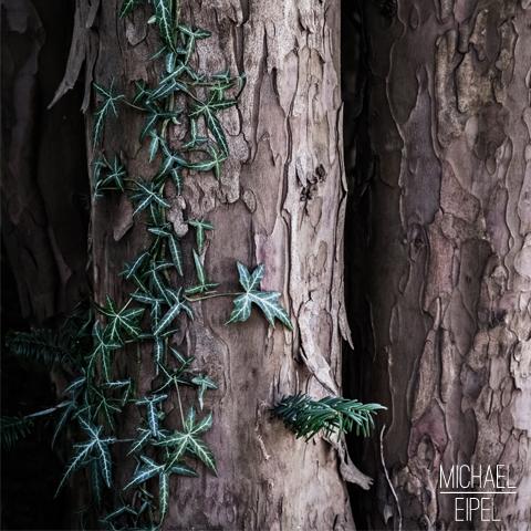 Efeu an Baumstamm – Stilllife
