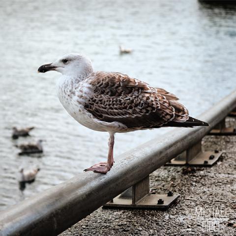Möwe am Hafen – Tierfotografie