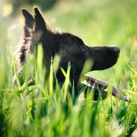Hund in hohem Gras – Tierfotografie