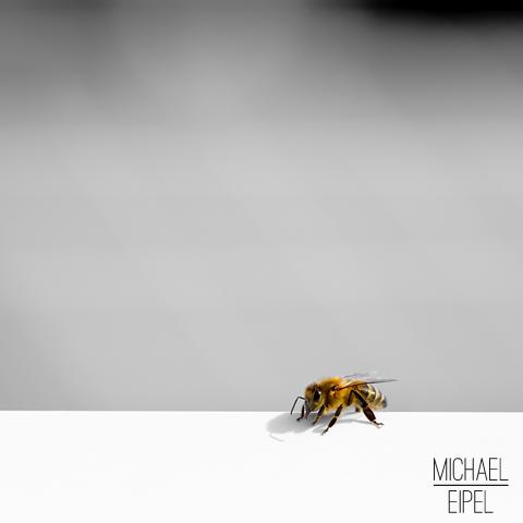 Biene am Fenster – Tierfotografie